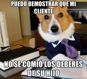 Perrito abogado