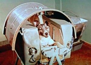Historias con perro : hoy Laika