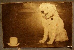 Historias con perro: hoy, Fernando