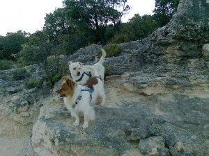 Yacky y Toko con arnés