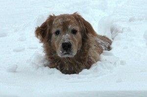 Ayuda a tu perro a pasar un buen invierno