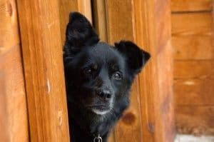 Tres falsos mitos sobre perros II