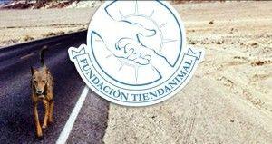 Fondo de alimentos de TiendAnimal, un idea genial para ayudar a las protectoras