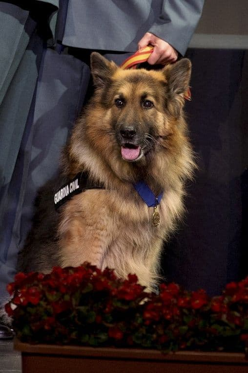 Historias con perro: Ajax