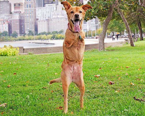 Historias con perro: Faith, una heroína de dos patas