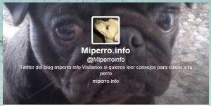 Ya está aquí, el Concurso primaveral de Miperro.info