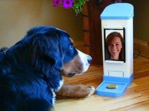 Inventos para perros curiosos