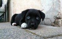 cachorros callejeros