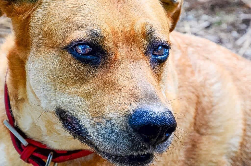 Artrosis canina, uno de los trastornos más frecuentes de los perros senior