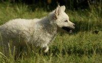 Cachorro corriendo en la hierba