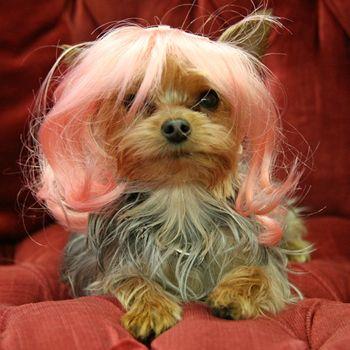 Pelucas para perros rosas