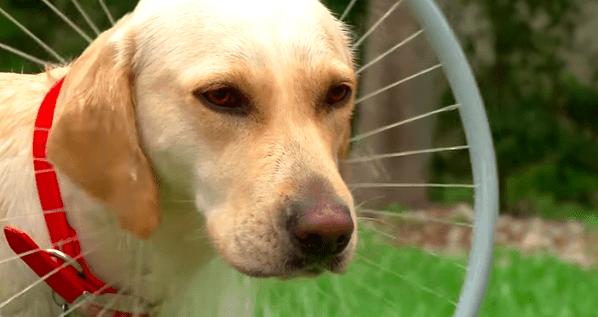 Woof Washer 360, una ingeniosa manera de bañar a tu perro