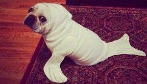 ¿Disfrazas a tu perro?