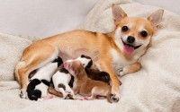 Perra amamantando a sus cachorros