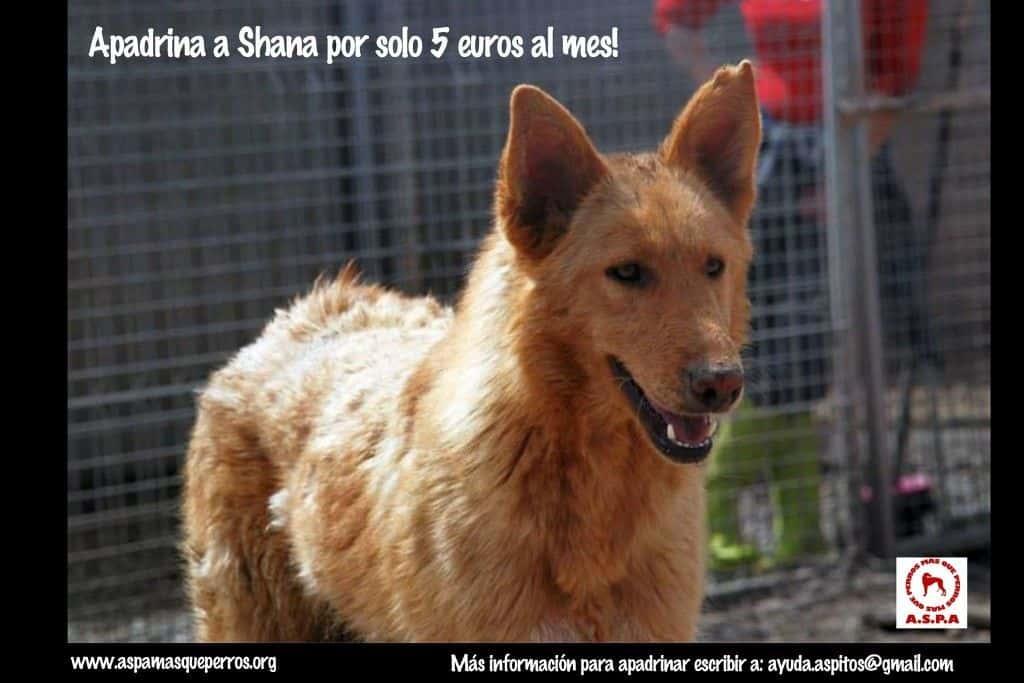 Shana Aspa más que perros