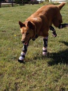 Perros estrella: Naki'o, el perro biónico