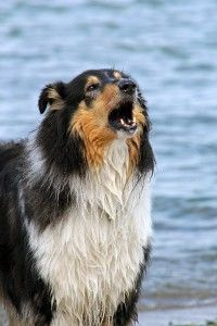 perro que ladra molesta vecino