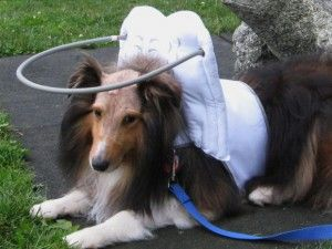 Arnés para perros ciegos