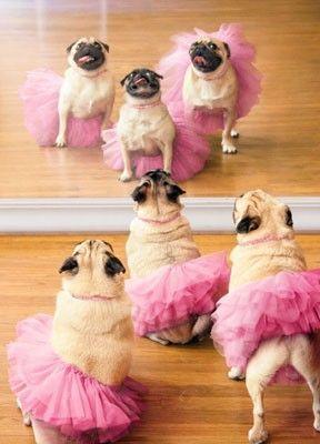 Carlinos ballet