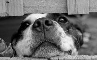 Perro en blanco y negro