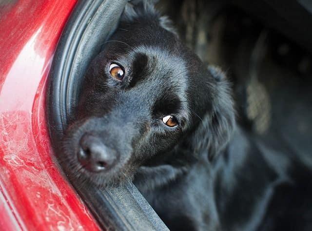 ¿Qué documentación necesito para viajar con mi mascota?