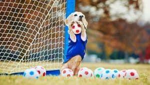 Purin, la Beagle de los 3 récords Guinness