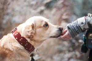 soñar con perro amistoso