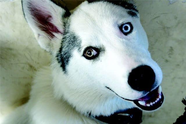 Conoce a tu perro por su lenguaje corporal
