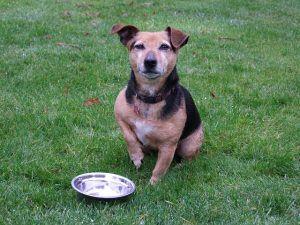 ¿Cuánta comida come un perro al día?