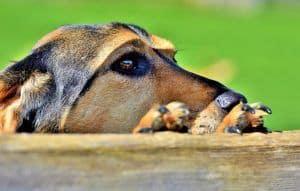 parasitos perros