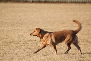 perro paseando con loxalizador gps