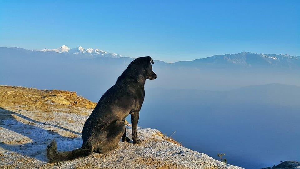 ¿Vas de viaje? Lleva a tu perro contigo