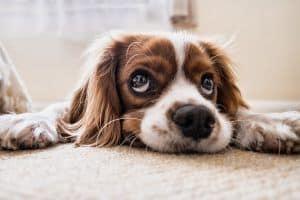 ideas de nombres para perros