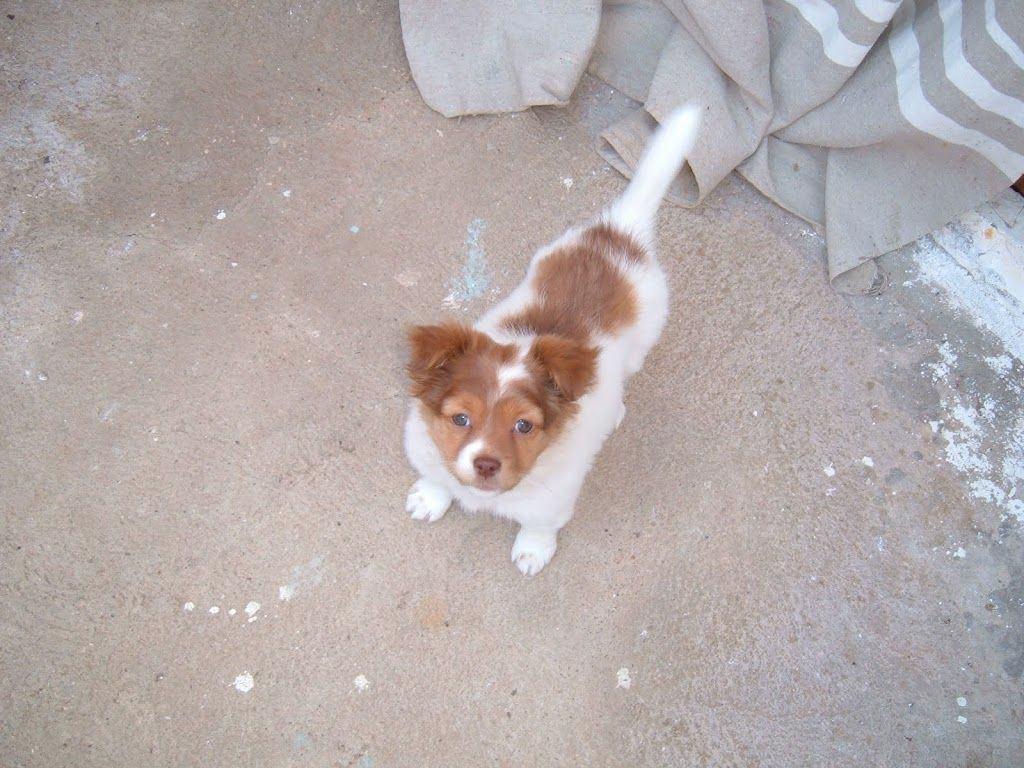 Adoptar un Perro II 8