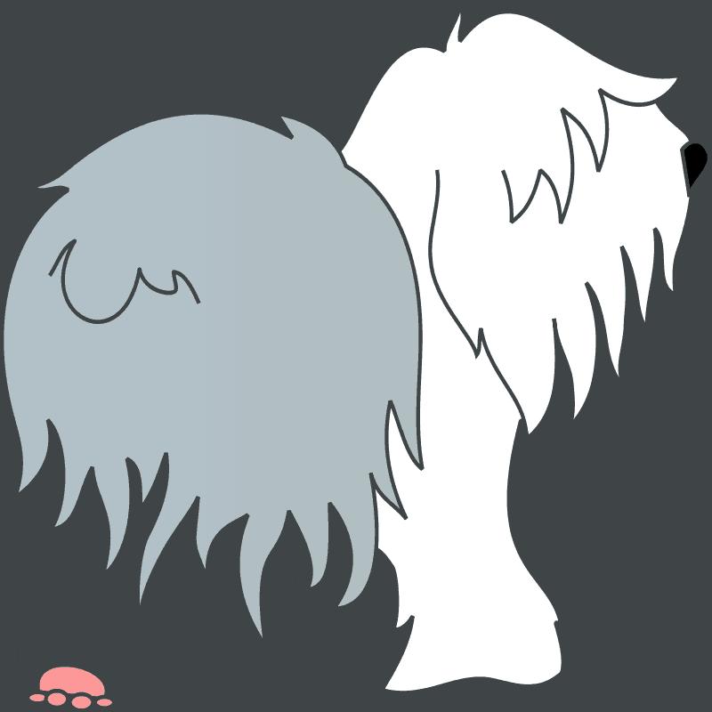 Razas de perro : hoy el Bobtail 7