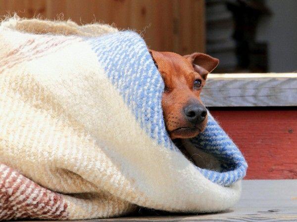 ¿Mi Perro Tiene Frío? 3