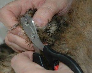 Cortar las uñas a mi perro
