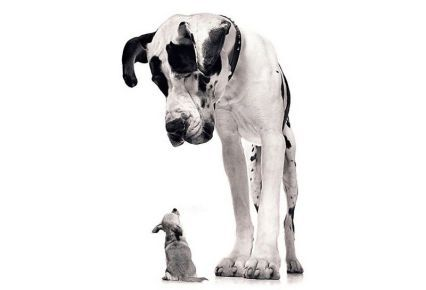 ¿Qué tamaño de perro elijo? 3