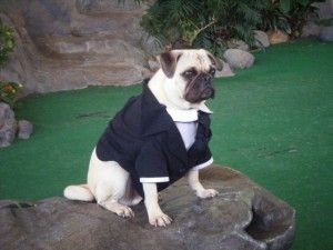 Perros Estrella; hoy, Frank