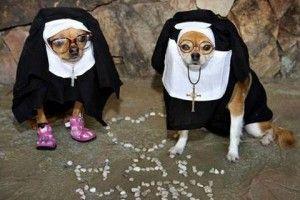 Perros monjas