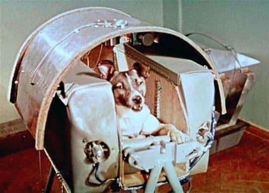 Historias con perro : hoy Laika 9