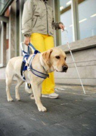 Perros guía, una gran labor 1