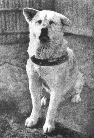 Historias con perro: Hoy, Hachiko 4