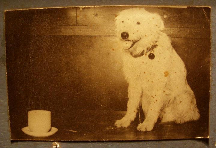 Historias con perro: hoy, Fernando 1