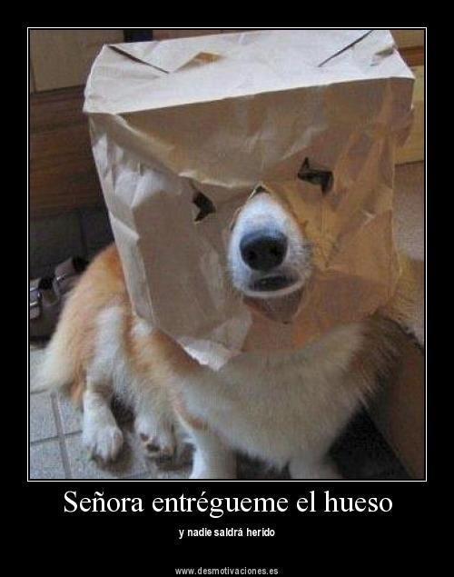 Humor Perruno: memes de perros III