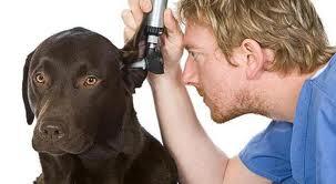 Recopilatorio Salud canina 2012