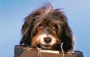 Recopilatorio Historias con perro