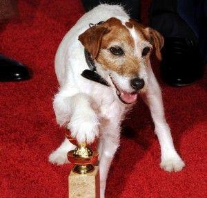 Perros estrella: recopilatorio 2012