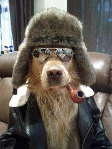 Humor perruno: imágenes divertidas de perros