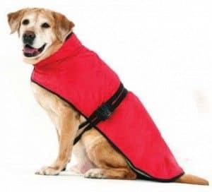 ropa para perros, comprar ropa para perros,